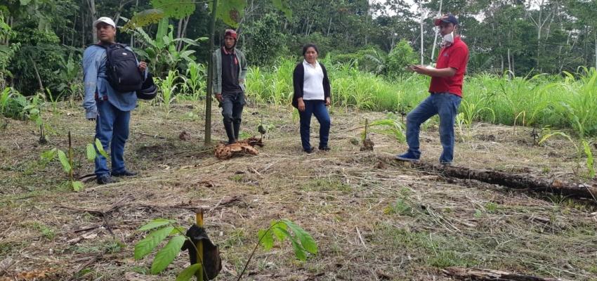 INSPECCIÓN DE LAS PLANTAS DE CACAO ENTREGADAS A LOS BENEFICIARIOS.